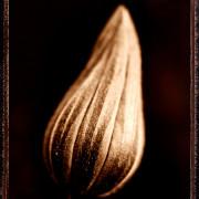Albumen print - gold toned & waxed © Vernon Trent