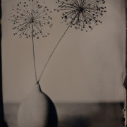 Dried Stuff & Vase - Wet Collodion Plate © Vernon Trent